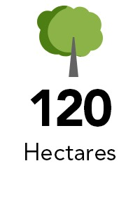 hectares
